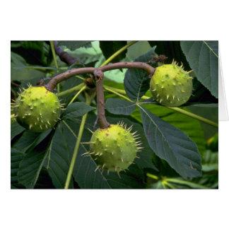 Horse chestnut tree fruit (aesculus hippocastarum) card