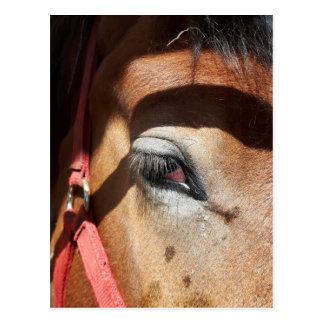 Horse Close-Up at Rockton World's Fair Postcard
