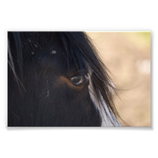 Horse Close-up Photo Print