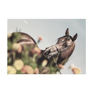 horse collection. arabian bay canvas print