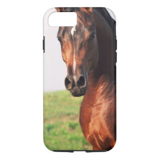 horse collection. arabian bay iPhone 8/7 case