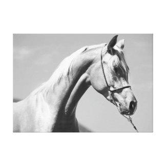 horse collection. arabian canvas print