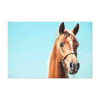 horse collection. arabian red canvas print