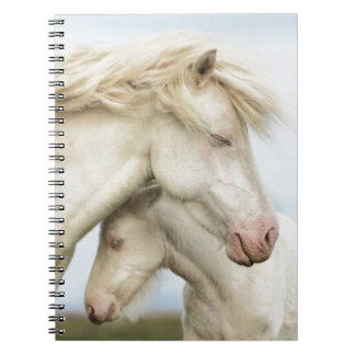Horse collection spiral notebook