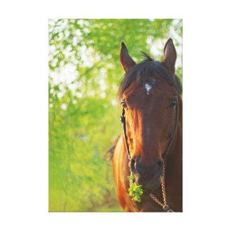 horse collection. spring canvas print