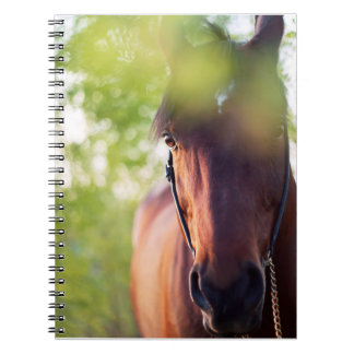 horse collection. spring note books