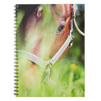 horse collection. spring notebooks