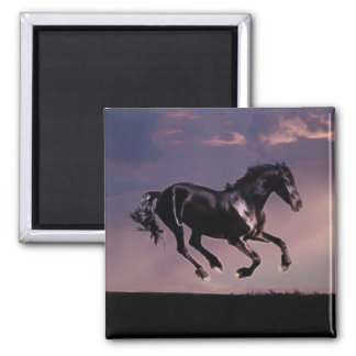 Horse dance at sunset magnet
