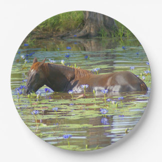 "Horse eating in the lake, Australia, 9"" Photo 9 Inch Paper Plate"