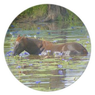 Horse eating in the lake, Australia, Photo Dinner Plate