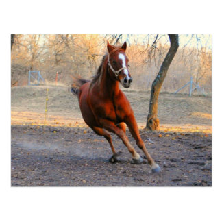 Horse enjoys the day CARD