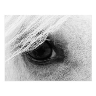 Horse Eye in Black and White Postcard