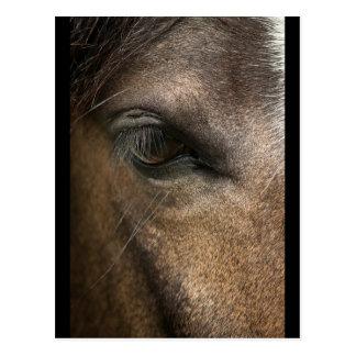 Horse Eye Postcard with margins