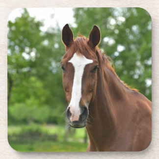 Horse Face With Marking Coaster