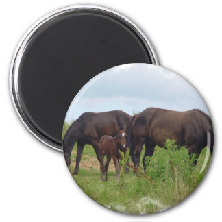 Horse Family Grazing Magnet Refrigerator Magnets