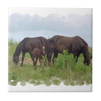 Horse Family Grazing  Tile