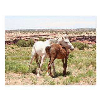 Horse & foal, Arizona Postcard