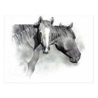 HORSE: FOAL: PENCIL ART: REALISM POSTCARD