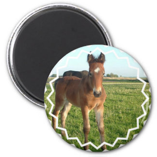 Horse Foal Round Magnet Refrigerator Magnet