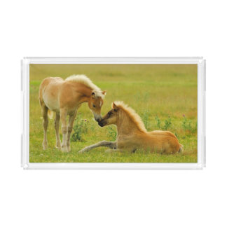 Horse Foals Acrylic Tray