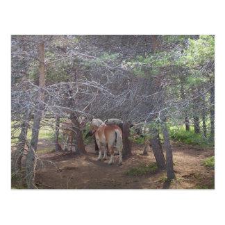 Horse Gathering Postcard