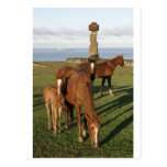 Horse grazing in Easter Island (Rapa Nui). Post Cards