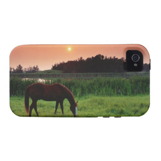 Horse Grazing in Field at Sunset Near Edmonton, iPhone 4/4S Cover