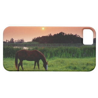 Horse Grazing in Field at Sunset Near Edmonton, Case For The iPhone 5