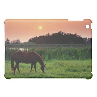 Horse Grazing in Field at Sunset Near Edmonton, iPad Mini Covers