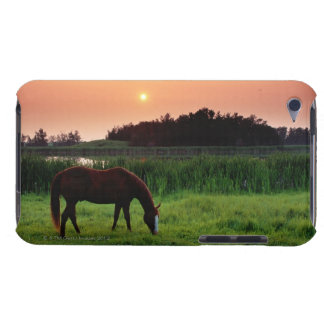 Horse Grazing in Field at Sunset Near Edmonton, iPod Touch Case