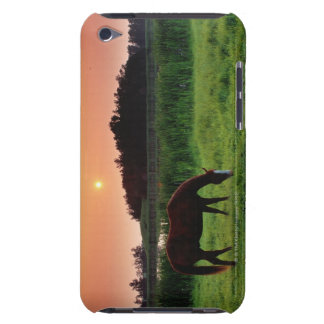 Horse Grazing in Field at Sunset Near Edmonton, iPod Touch Case-Mate Case