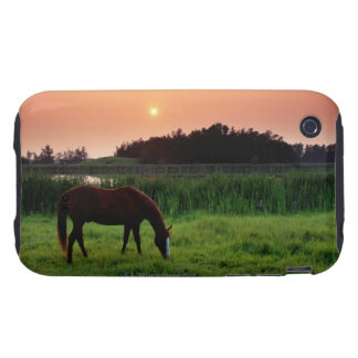 Horse Grazing in Field at Sunset Near Edmonton, Tough iPhone 3 Case