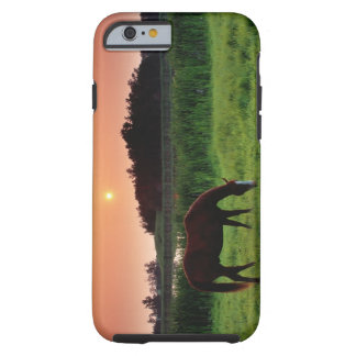 Horse Grazing in Field at Sunset Near Edmonton, Tough iPhone 6 Case