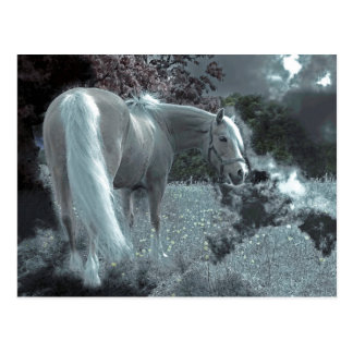 Horse Grazing in the Moonlight Postcard