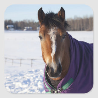 Horse grazing on a snow-covered field on Ekero Square Sticker