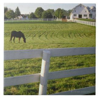 Horse grazing on farm ceramic tiles