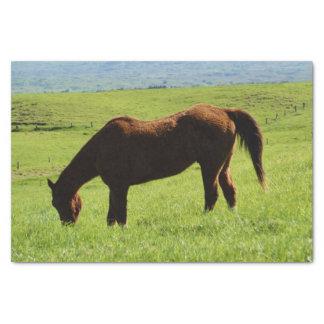 Horse Grazing Tissue Paper