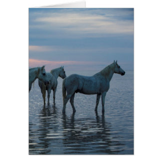 Horse Greeting Card - Camargue Horses Watching