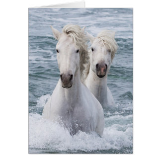 Horse Greeting Card - Sea Horse Twins