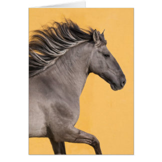 Horse Greeting Card - Sorraia Stallion Runs