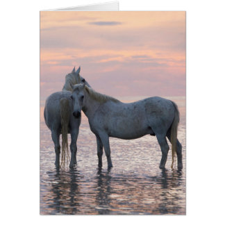 Horse Greeting Card - Two White Horses Friends