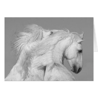 Horse Greeting Card - Two White Stallions Play