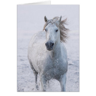 Horse Greeting Card - White Horse Runs at Sunrise