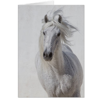 Horse Greeting Card - White Stallion Runs Up