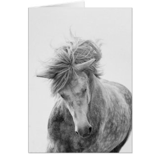Horse Greeting Card - Young Camargue Stallion Runs