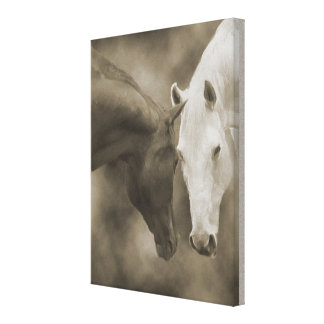 Horse Greetings Wrap Canvas