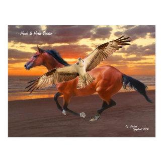 Horse & Hawk sunrise Postcard