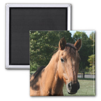 Horse head magnet