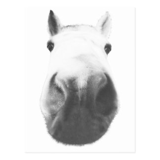Horse head post cards