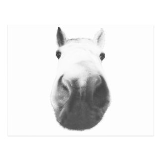 Horse head postcards